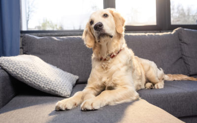 How to Create Off-Limit Pet Areas in Your Home